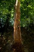 Bois-Ecorces 001