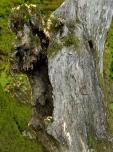 Bois-Ecorces 002_1