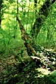 Bois-Ecorces 009_1