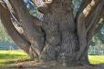 Bois-Ecorces 021_1