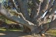 Bois-Ecorces 022_1