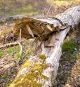Bois-Ecorces 025