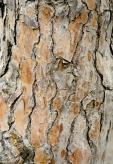 Bois-Ecorces 040