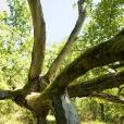 Bois-Ecorces 066