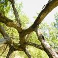 Bois-Ecorces 069