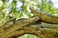 Bois-Ecorces 073