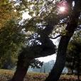 Bois-Ecorces 103_1