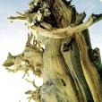 Bois-Ecorces 131_1