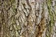 Bois-Ecorces 132_1