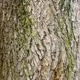 Bois-Ecorces 133_1
