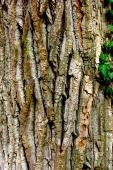 Bois-Ecorces 136_1