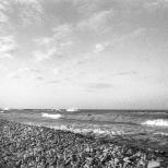 Adriatiaque