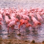 Flamants Roses_001_1