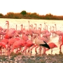 Flamants Roses_003_1