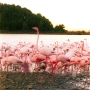 Flamants Roses_004