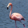 Flamants Roses_006_1