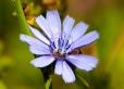 Fleurs_Couleur 006