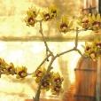 Fleurs_Couleur 012