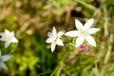 Fleurs_Couleur 016