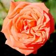 Fleurs_Couleur 024