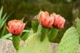 Fleurs_Couleur 042