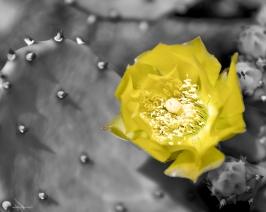 Fleurs_Couleur 043