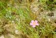 Fleurs_Couleur 048