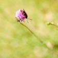 Fleurs_Couleur 049