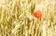Fleurs_Couleur 055