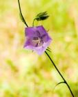 Fleurs_Couleur 059