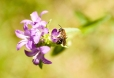 Fleurs_Couleur 066