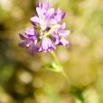 Fleurs_Couleur 069