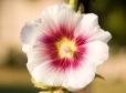 Fleurs_Couleur 083