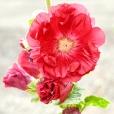 Fleurs_Couleur 084