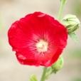 Fleurs_Couleur 085