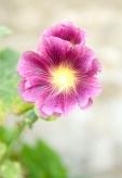 Fleurs_Couleur 086