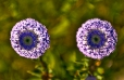 Fleurs_Couleur 088