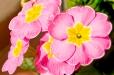 Fleurs_Couleur 089