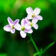 Fleurs_Couleur 090