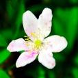 Fleurs_Couleur 091_1