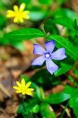 Fleurs_Couleur 092