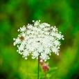 Fleurs_Couleur 121