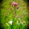 Fleurs_Couleur 123