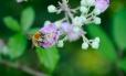 Fleurs_Couleur 133