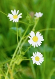 Fleurs_Couleur 138