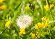 Fleurs_Couleur 145