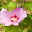 Fleurs_Couleur 151