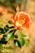 Fleurs_Couleur 152
