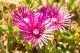 Fleurs_Couleur 154