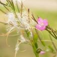 Fleurs_Couleur 160